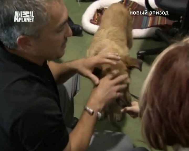 Dog Whisperer, Cesar Millan 2009