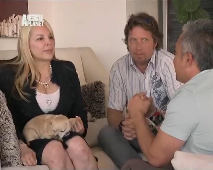 Переводчик с собачьего 2009