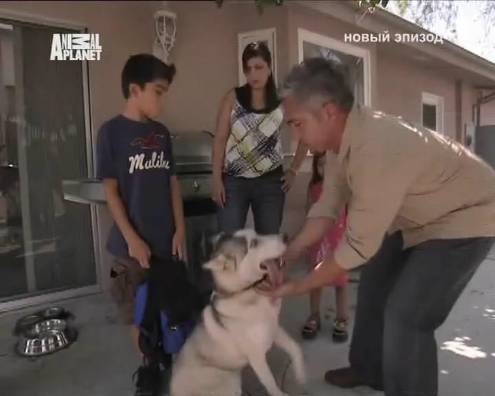 Переводчик с собачьего 2010