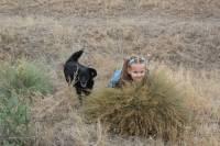 наши дети и собаки